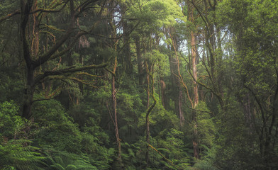 Australian forest scene