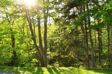 Trees and Sun - Walking Tours in Canada