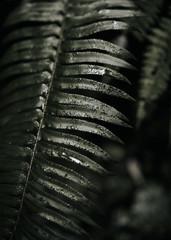 Close up of pine leaf