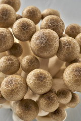 Wholesome Beech Mushrooms with Copy Space