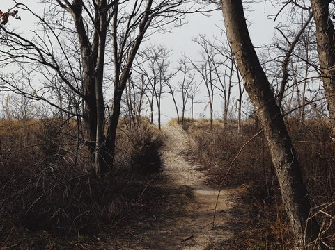 Landscape views of a natural winter forest and beach coastline in Maryland