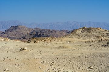 Whimsical Patterns of the Desert