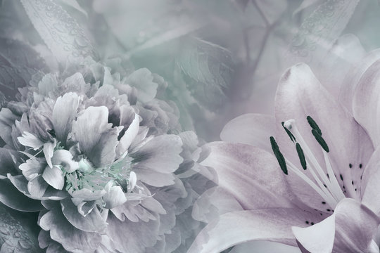 Floral background of  lily and peony.  Flowers close-up on a  light pink-turquoise  background. Flower composition. Nature.
