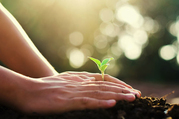 hand planting small tree and sunrise in garden. concept green world