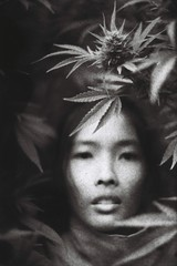 Young woman portrait chilling in canabis bushes