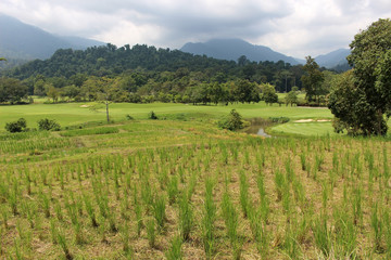 Landscape of rice fields, golf course, green forests and mountains in Khao Soi Dow District of eastern Thailand.