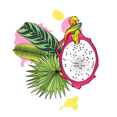 Vector illustration of dragon fruit and tropical leaves on white background. Isolated composition of exotic fruit pitaya and greenery for design. Bright design element for label, menu, advertising