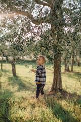 Lovely little boy walking by sunset olive garden