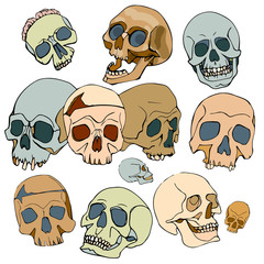 pattern with skulls, vector