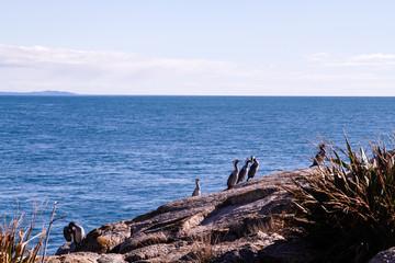 Wall Mural - Wasservogel Neuseeland