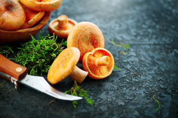 Raw wild Saffron milk cap mushrooms on dark old rustic background. Lactarius deliciosus. Rovellons, Niscalos. Organic fresh mushrooms with special knife closeup on a table