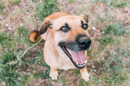 Happy dog smiling at the camera
