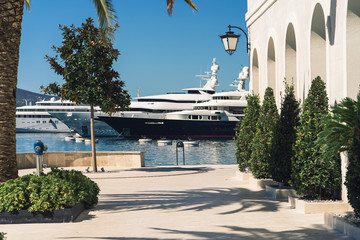 palm trees and yachts on a sunny day in the marina in Porto Montenegro, Tivat