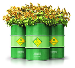 Group of green biofuel drums with sunflowers isolated on white background