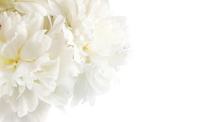 White flowers peonies isolated