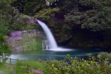 秋桜と滝~Cosmos&Waterfall