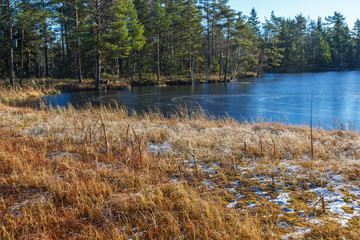 Frozen lake at a coniferous forest