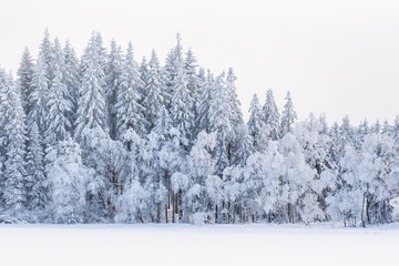 Winter forest with snow and frost in the trees