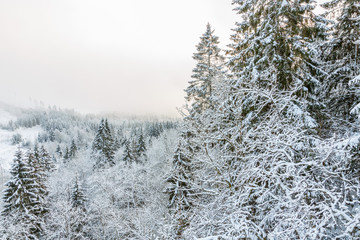 View of a forest with frost and snow in the winter