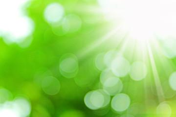 日差し グリーン