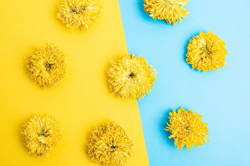 Dry chrysanthemums on contrast background