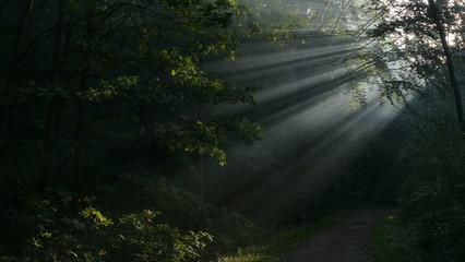 Promień słońca o poranku. Jesienią i latem. Po mgielnym poranku. Las w Bytomiu. Polska