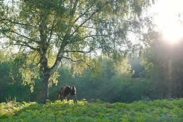 Horse with a rider on a beautiful forest landscape. Sunlight