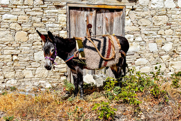 Donkey outside an ancient door @ Koilani, Cyprus