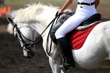Sport horse close up under old leather saddle on dressage competition