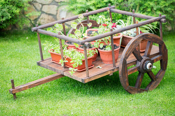 old wheel cart with flowers in the park.