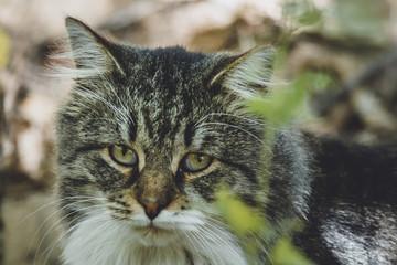 sad cat portrait