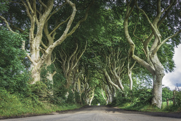 The Dark Hedges in Northern Ireland.  This unique and atmospheric place is a hugely popular place.