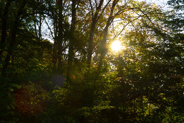 rays of sun in the forest in autumn