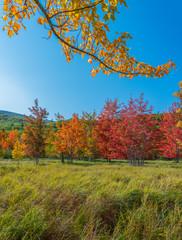 Autumn in Acadia National Park,Maine,USA
