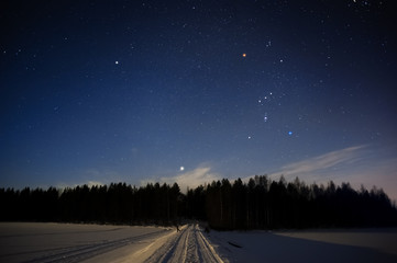 Orion constellation and Sirius above forest in winter sky.