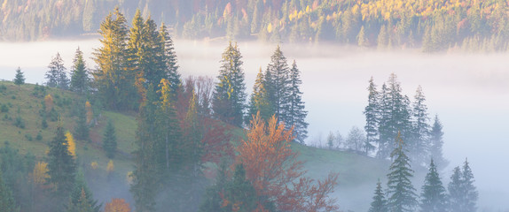 Beautiful morning panorama of forest covered by low clouds. Autumn fog on the mountain hills. Misty fall woodland. Colored sunrise in forested mountain slope..