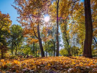 Wunderschöner Wald im Herbst
