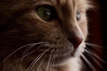 Focused Cat