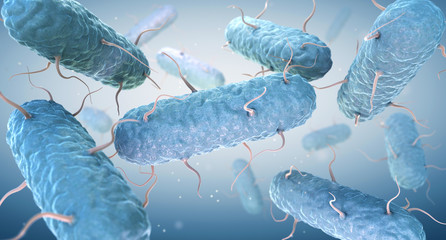 Enterobacteria. Enterobacteriaceae are a large family of Gram-negative bacteria