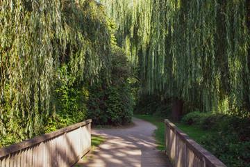 romantische Holzbrücke mit Trauerweiden. Standort: Deutschland, Nordrhein-Westfalen, Hoxfeld