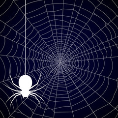 Halloween, spider web background - vector