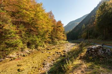 Kleiner Bach mit Laubbäumen im Herbst