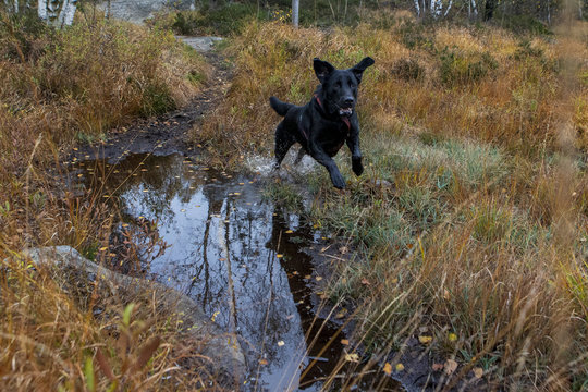 Dog playing in a muddy forest