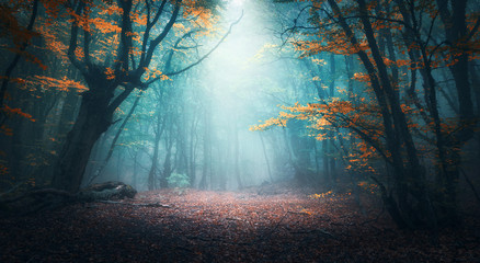 Photo sur Aluminium Route dans la forêt Beautiful mystical forest in blue fog in autumn. Colorful landscape with enchanted trees with orange and red leaves. Scenery with path in dreamy foggy forest. Fall colors in october. Nature background
