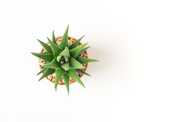 Stores photo Cactus Top view small green cactus plant in pot isolated on white desk background with copy space.