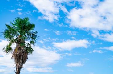 ヤシの木と青空 / 南国のイメージ