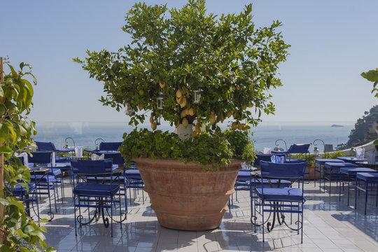 Lemon tree in a pot in Positano on Amalfi Coast in Italy