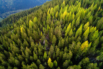 Forest - Aerial view