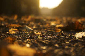 Autumn Golden Brown Leaves at Sunset Blurred Background