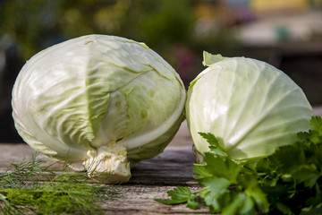 white cabbage in the street